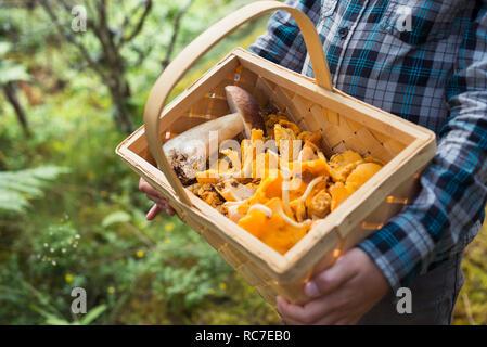Bambino azienda cesto pieno di funghi Immagini Stock
