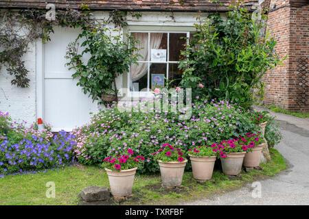 Gerani e nelle petunie in vasi di fiori al di fuori di un periodo cottage in Turville villaggio in Chilterns. Buckinghamshire, Inghilterra Immagini Stock