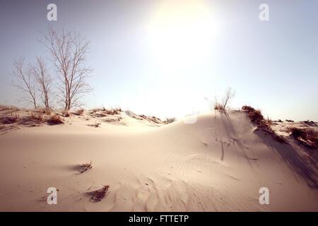 Dune nel mezzogiorno Immagini Stock