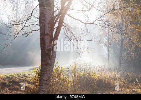 Paesaggio con strada rurale e bosco in raggi di misty sole autunnale, Lohja, Finlandia meridionale, Finlandia Immagini Stock