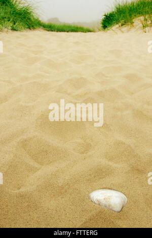 Unico guscio del mare su una spiaggia / Dune Immagini Stock