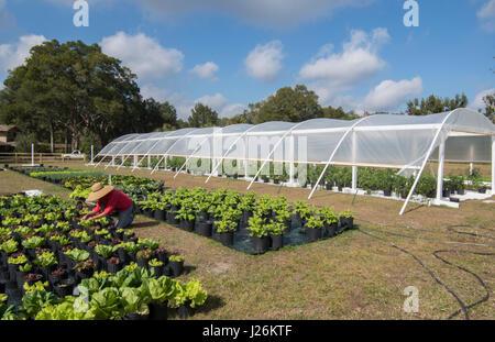 Central Florida home organico giardino con piante e verdure con donna agricoltura in cortile per una sana dieta Immagini Stock
