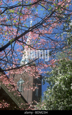 Romantica ,immagine suggestiva della molla di rami fioriti criss attraversando una chiesa bianca steeple in Philadelphia,USA Immagini Stock