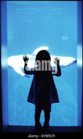 Silhouette di una ragazza guarda un pesce dal vetro aqualium Immagini Stock