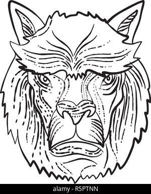 Lo stile di attacco illustrazione della testa di un Alpaca, una specie di South American camelid che è simile al llama fatto su scraperboard scratchboard st Immagini Stock