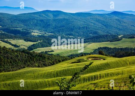 Gli alberi su un paesaggio, Volterra, in provincia di Pisa, Toscana, Italia Immagini Stock