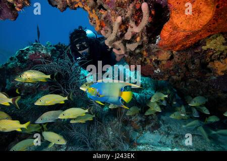 Scena sulla barriera corallina con subacqueo e la scuola di pesce. Immagini Stock
