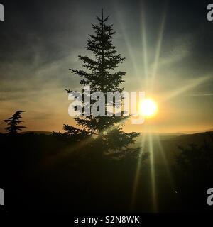 Una struttura ad albero pinsapo a sunrise di Grazalema, Cadice, Andalusia, Spagna Immagini Stock