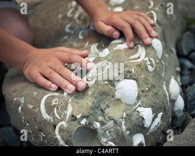 Ragazzo in mani toccano roccia contenente conchiglie. Immagini Stock
