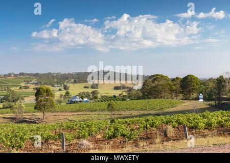 Ivanhoe Wine Estate, la Hunter Valley, Nuovo Galles del Sud, Australia Pacific Immagini Stock