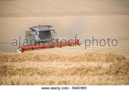 Vista del raccolto di mietitrebbia estate taglio campo di grano raccolto in agriturismo Immagini Stock