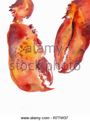 La pittura ad acquerello di due chele di aragosta Immagini Stock