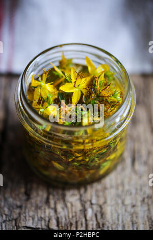 Hypericum fiori in macerazione in olio. Immagini Stock