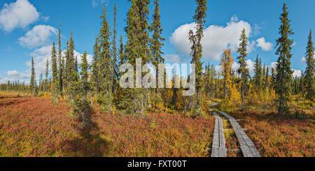 Colori autunnali in Lapponia, vicino al confine della Finlandia e Russia. Immagini Stock