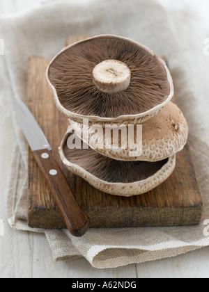 Grandi funghi piani shot con professionisti di medio formato fotocamera digitale Immagini Stock