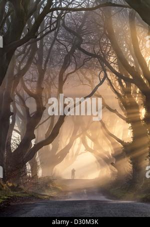 Silhouette figure sotto il buio siepi in Irlanda del Nord. Immagini Stock
