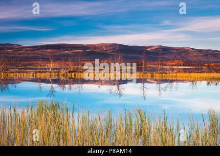 Bella serata autunnale a Fokstumyra riserva naturale, Dovre, Norvegia. Immagini Stock