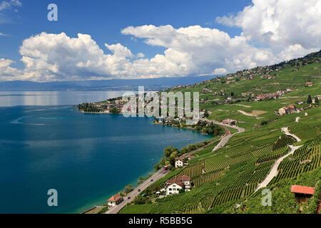 La Svizzera, Vaud, Lavaux vigneti e Lac Leman / Lago di Ginevra Immagini Stock
