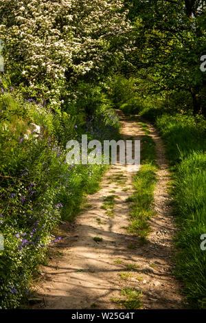 Regno Unito, Cumbria, York, Settlebeck Gill, Giubileo boschi, sentiero fiancheggiato con fiori selvatici in inizio di estate Immagini Stock