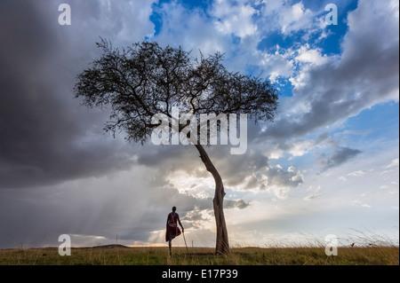 Guerriero masai di sostare sotto alberi di acacia con nuvole temporalesche sopra.Masai Mara National Reserve.Kenya Immagini Stock