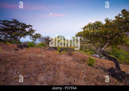Sera vicino Cerros los Picachos de Ola montagne, Cocle Affitto provincia, Repubblica di Panama. Immagini Stock