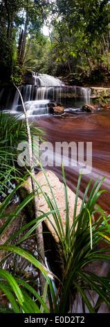 """Gulik cade, il bordo del sud dell'altopiano, Maliau Basin, """"Mondo Perduto"""", Borneo Immagini Stock"""