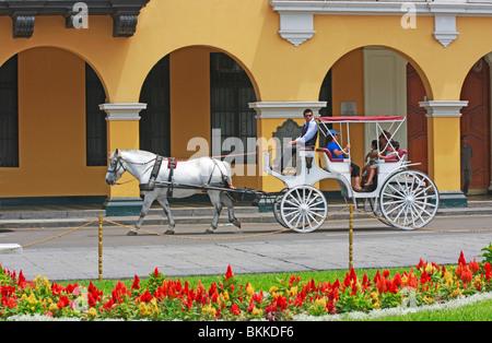 Elegante colore bianco cavallo e carrozza offre escursioni intorno al centro storico della città di Lima capitale Immagini Stock