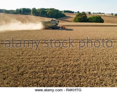 Antenna di raccolto di mietitrebbia e estate campo di grano raccolto farm Immagini Stock