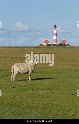 Pecore pascolano sulle barene, dietro il faro Westerhever, Westerhever, Schleswig-Holstein, Germania Immagini Stock