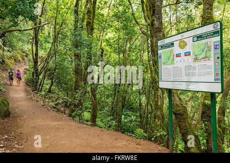 Percorso escursionistico nel Parco Nazionale di Garajonay. La Gomera, isole Canarie, Spagna. Immagini Stock