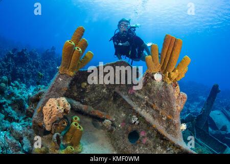 Tubo giallo spugne adornano una sezione dell'oro verde naufragio, Grand Cayman Immagini Stock