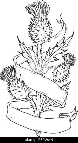 Disegno stile sketch illustrazione di un cardo scozzese con nastro o scorrere avvolgere sulla isolato sullo sfondo bianco. Immagini Stock