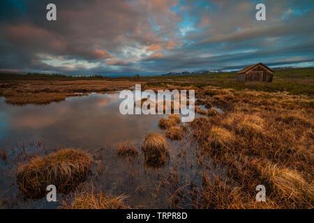 Inizio giugno mattina a Fokstumyra riserva naturale, Dovre, Norvegia. Immagini Stock