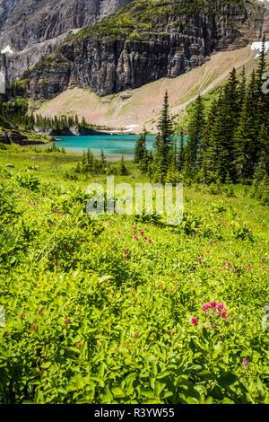 Il Parco Nazionale di Glacier, Montana Immagini Stock