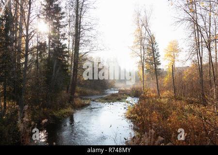 Paesaggio del fiume di bosco e la nebbia in autunno la luce solare, Lohja, Finlandia meridionale, Finlandia Immagini Stock