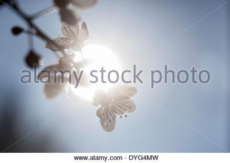 Fiori delicati visto contro la luce del sole Immagini Stock