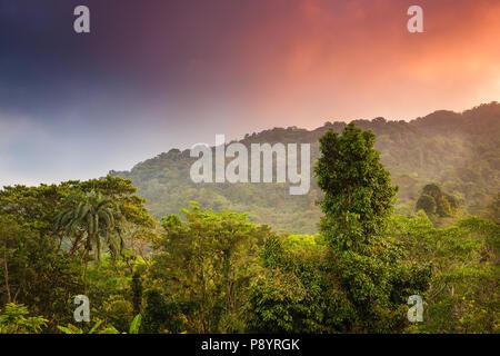 Cielo colorato a sunrise sulla foresta pluviale in Chagres national park, lungo il vecchio Camino Real trail, Repubblica di Panama. Immagini Stock