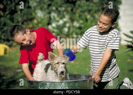 Due ragazzi cane lavaggio © Myrleen Pearson ...Ferguson Cate Immagini Stock