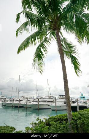 Barche a Miami Immagini Stock