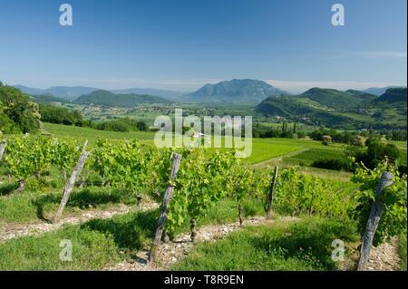 Francia, Savoie, prima del paese savoiardo, Jongieux vigne e del monte Colombier Immagini Stock