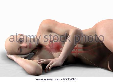 Generata da computer illustrazione biomedica del cuore e delle arterie interno della donna sdraiata su un lato Immagini Stock
