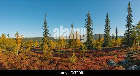 """Colori autunnali in Lapponia. Sharp """"montagna"""" sullo sfondo è Korvatunturi fjell, al confine con Immagini Stock"""