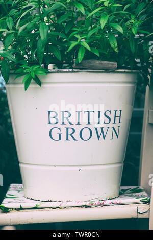 British cresciuto giardino Smalto metallico benna pot alle erbe su un display ad RHS Chatsworth flower show 2019. Chatsworth, Derbyshire, Regno Unito. Vintage filtro applicato Immagini Stock